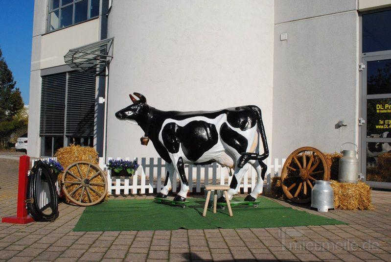 Melkkuh mieten & vermieten - Kuh Wettmelken.mehrere Kühe auf Lager! Inkl.MWSt. in Sinsheim