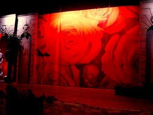 Kulissen mieten & vermieten - Rosen Kulisse, Rose, Blumen, Dornenbusch, Dornen, Rosenball, Kulisse, Dekoration, Blumenstrauß, Event, Messe in Kamp-Bornhofen