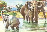 Dekorationsservice mieten & vermieten - Afrika Kulissen, Afrika, afrikanisch, Kulissen, Trommelkreis, Elefanten, Tanzen, typisch Afrika, Wüste, Event, Messe in Lahnstein