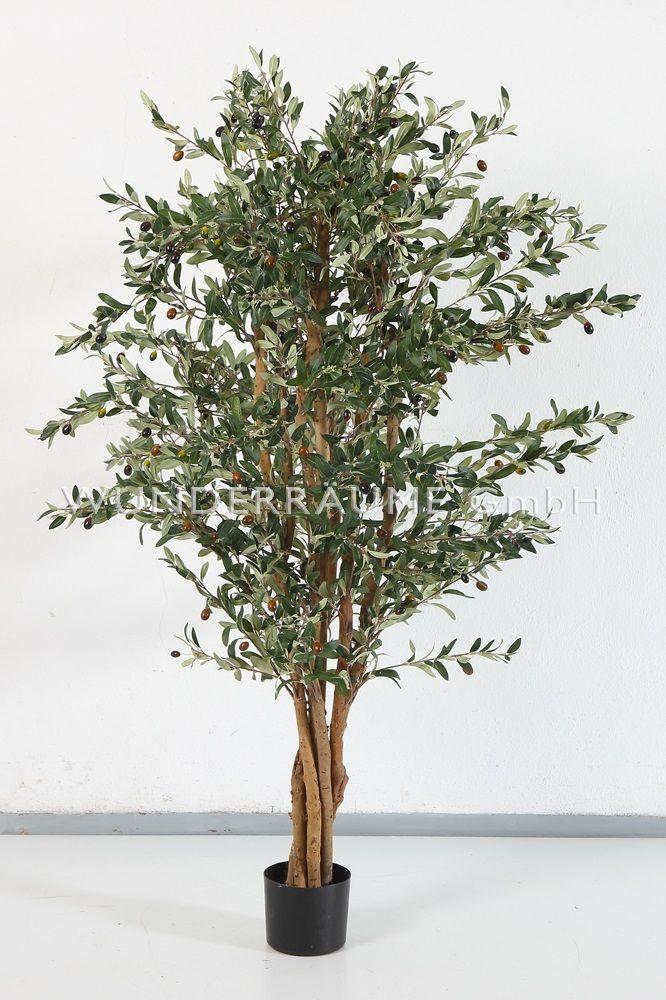 Pflanzen mieten & vermieten - Olivenbaum M - WUNDERRÄUME GmbH vermietet: Dekoration/Kulisse für Event, Messe, Veranstaltung, Incentive, Mitarbeiterfest, Firmenjubiläum in Lichtenstein/Sachsen