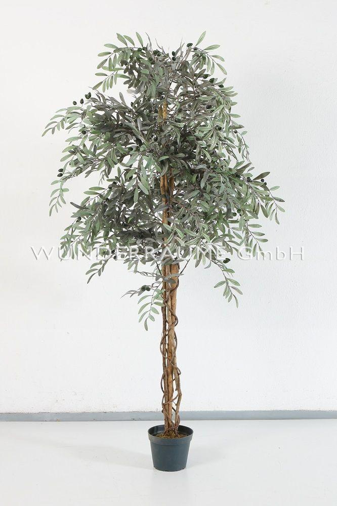 Pflanzen mieten & vermieten - Olivenbaum L - WUNDERRÄUME GmbH vermietet: Dekoration/Kulisse für Event, Messe, Veranstaltung, Incentive, Mitarbeiterfest, Firmenjubiläum in Lichtenstein/Sachsen