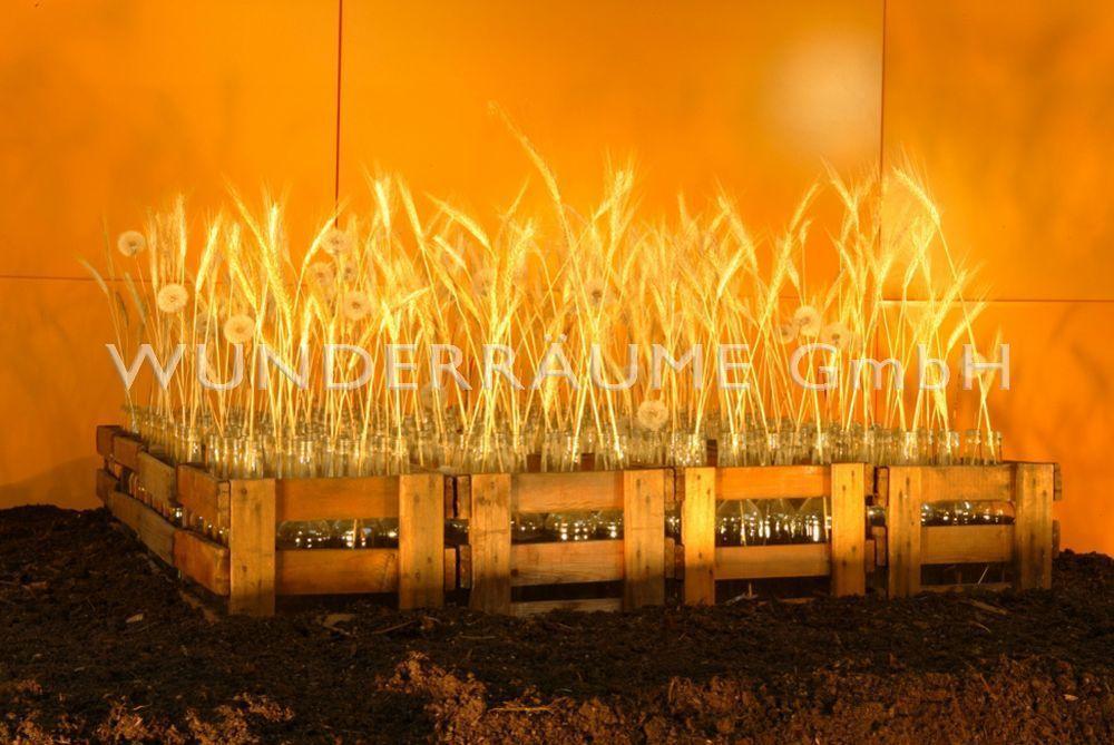 Pflanzen mieten & vermieten - Weizenfeld - WUNDERRÄUME GMBH vermietet: Dekoration/Kulisse für Event, Messe, Veranstaltung, Incentive, Mitarbeiterfest, Firmenjubiläum in Lichtenstein/Sachsen