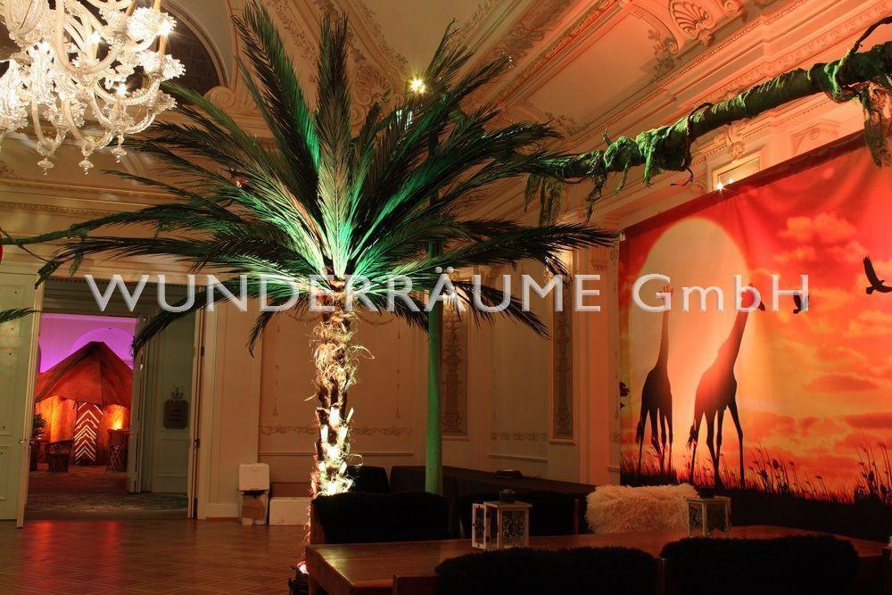 Pflanzen mieten & vermieten - Palme XL in Lichtenstein/Sachsen