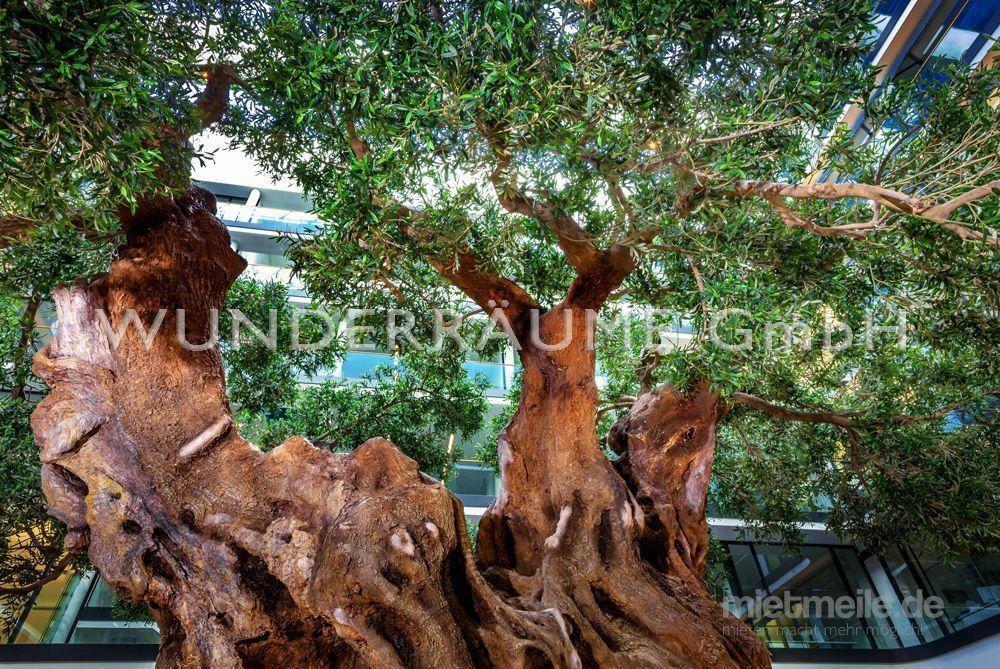 Pflanzen mieten & vermieten - Olivenbaum XXL - WUNDERRÄUME GmbH vermietet: Dekoration/Kulisse für Event, Messe, Veranstaltung, Incentive, Mitarbeiterfest, Firmenjubiläum in Lichtenstein/Sachsen