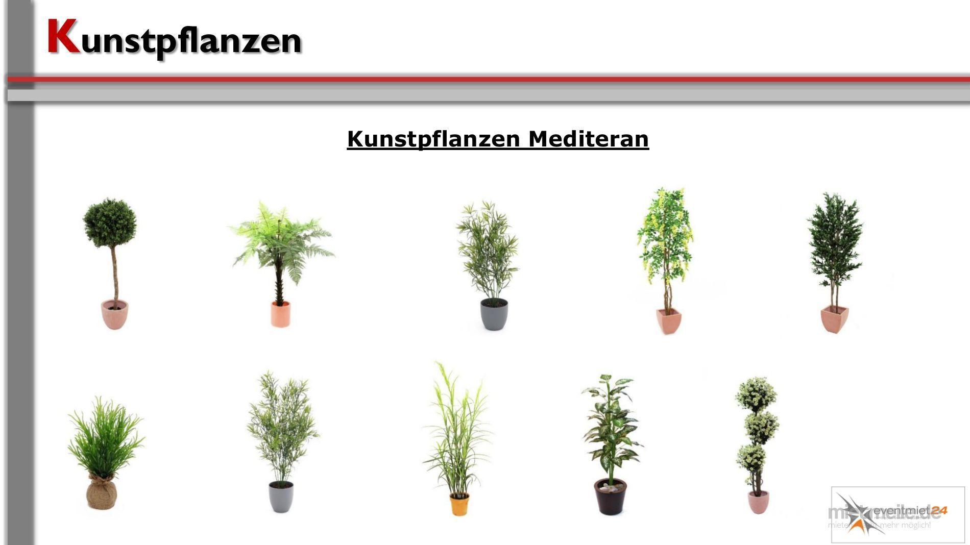Pflanzen mieten & vermieten - Pflanzen / Kunststoffpflanzen in Neunkirchen am Sand