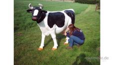 Wettmelken mit Dolly der Kuh