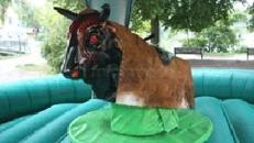 bullriding, rodeostier mieten, leihen