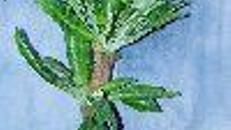 Palmen,Bambuspflanzen