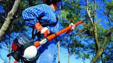 Astsäge 30 cm Schwertlänge, bis 5 m Arbeitshöhe, Benzingemisch