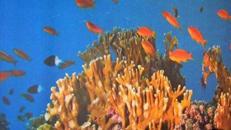 Unterwasserwelt Kulissen, Unterwasserwelt, Kulisse, Unterwasser, Tiefsee, Korallen, Korallenriff, Riff, Fische, Wasser