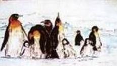 Pinguine Kulisse, Kulisse, Pinguin, Schwimmvogel. Tauchvogel, Eis, Wasser, Pol, Polar, Schnee, Nordpol, Eiswelt