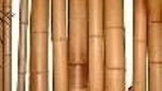 Bambus Rohre, Bambus, Bambusrohre, Bambusstange, Holz, Stab, Stange, Stängel, Rohr, Bambusrohr, Dekoration, leihen