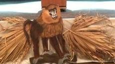 Affen Cut Outs, Affe, Affen, Äffchen, Kletterer, Kapuziner, Dschungel, Urwald, Tier, Wildtier, Zoo, Afrika, afrikanisch