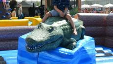 Alligator Rodeo wie Bullriding inkl. 19% MwSt.