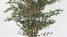 Olivenbaum M - WUNDERRÄUME GmbH vermietet: Dekoration/Kulisse für Event, Messe, Veranstaltung, Incentive, Mitarbeiterfest, Firmenjubiläum