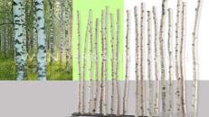 """Raumteiler """"Birkenstamm"""" - WUNDERRÄUME GmbH vermietet: Dekoration/Kulisse für Event, Messe, Veranstaltung, Incentive, Mitarbeiterfest, Firmenjubiläum"""