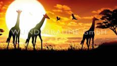"""Leinwanddruck """"Giraffen"""" - WUNDERRÄUME GmbH vermietet: Dekoration/Kulisse für Event, Messe, Veranstaltung, Incentive, Mitarbeiterfest, Firmenjubiläum"""