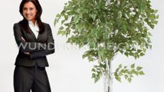 Birkenbaum - WUNDERRÄUME GmbH vermietet: Dekoration/Kulisse für Event, Messe, Veranstaltung, Incentive, Mitarbeiterfest, Firmenjubiläum