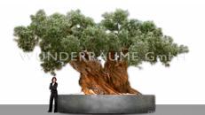 Olivenbaum XXL - WUNDERRÄUME GmbH vermietet: Dekoration/Kulisse für Event, Messe, Veranstaltung, Incentive, Mitarbeiterfest, Firmenjubiläum