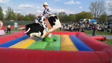 Bullriding / Rodeo günstig für Ihre Veranstaltung mieten