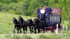 Pferde-Omnibus