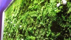 Moosmodule aus echtem stabilisiertem Moos