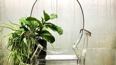"""Design-Stuhl """"Krystall"""" - transparent"""