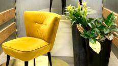 Cocktail Sessel mit Samtbezug / Cocktail Stühle / Lounge Sessel