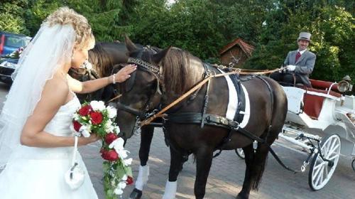 Kutschen & Hochzeitstauben
