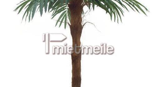 Palme mit 210m Höhe und echtem