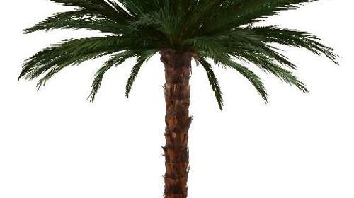 Authentische Palmen und Karibikbar Deko