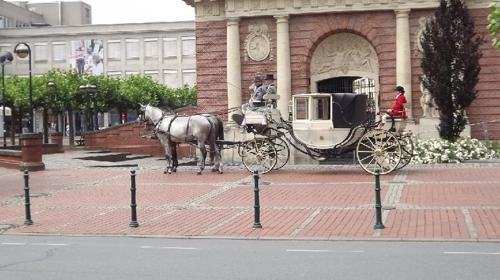 Hochzeitskutsche mit weißen Pferden