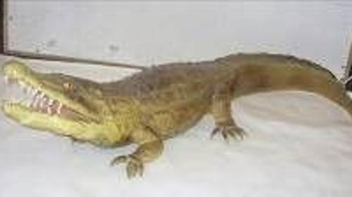 Krokodil Figur, Krokodil, Kroko, Alligator, Figur, Fluss, Süßwasser, Salzwasser, Wasser, Everglades, Dekoration, leihen