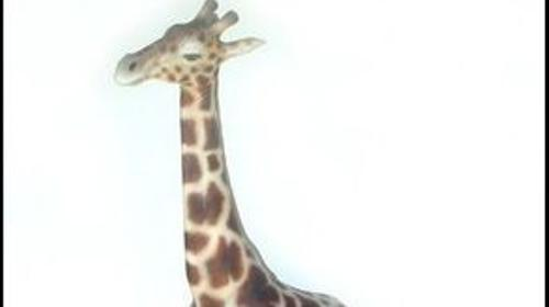 Giraffen Figuren, Giraffe, Figur, Großtier, Afrika, afrikanisch, Zoo, Savanne, Serengeti, Tier, Wildtier, Dekoration