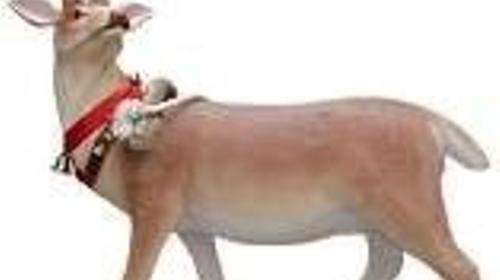 Rentier Figur, Rentier, Kanada, Tier, Winter, Schnee, Rudolph, Eis, Weihnachten, Weihnachtsmann, Schlittentier, Zugtier