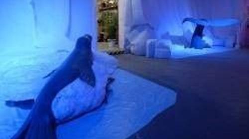 Robbe auf Eisscholle Figur, Figur, Eisscholle, Robbe, Seehund, Seelöwe, Unterwasser, Wasser, Meer, Ozean, Arktis, Polar