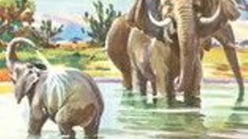 Afrika Kulissen, Afrika, afrikanisch, Kulissen, Trommelkreis, Elefanten, Tanzen, typisch Afrika, Wüste, Event, Messe