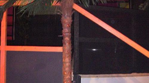 Kunstpflanze Palme 1,90m