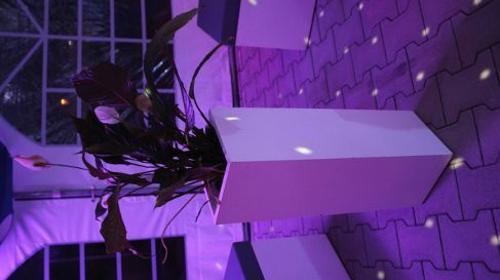 Lounge - Blumensäule / Blumensäule / Blumen / Dekoration
