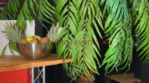 Echtblattpalme / Palme / Pflanze / Naturdekoration / Dekoration / Dekorationspalme
