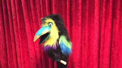 Coco, der Papagei