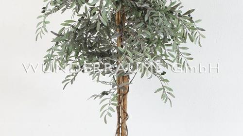 Olivenbaum L