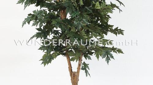 Ahornbaum - -WUNDERRÄUME GmbH vermietet: Dekoration/Kulisse für Event, Messe, Veranstaltung, Incentive, Mitarbeiterfest, Firmenjubiläum