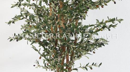Olivenbaum M