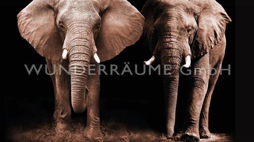 """Leinwanddruck """"Elefanten"""" - WUNDERRÄUME GmbH vermietet: Dekoration/Kulisse für Event, Messe, Veranstaltung, Incentive, Mitarbeiterfest, Firmenjubiläum"""