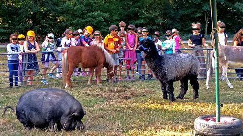 Event mobiler Streichel - Zoo Kinderattraktion Stadtfest Eröffnung Messe Jubiläum Tag der offenen Tür Erlebnis - Tiere streicheln Hühner Ziegen Esel Alpaka und mehr