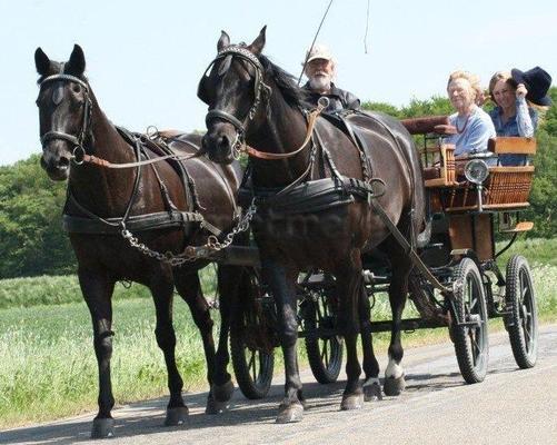 Kutsche mieten & vermieten - Kutschfahrten im Münsterland in Dülmen