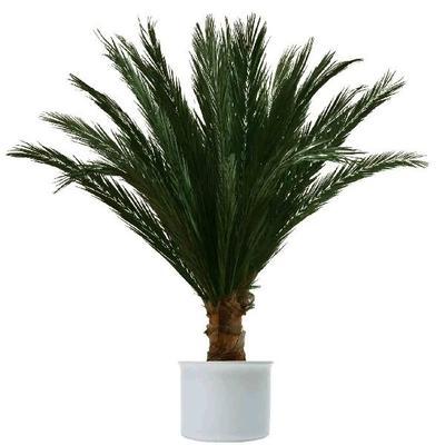 Pflanzen mieten & vermieten - Authentische Palmen und Karibikbar Deko in Berlin
