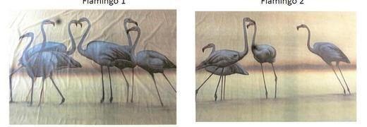 Kulissen mieten & vermieten - Flamingos Kulisse, Flamingo, Kulisse, Afrika, Vogel, Pink, Küste, afrikanisch, Tier, Wildtier, Dekoration, leihen in Kamp-Bornhofen