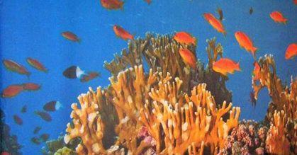 Kulissen mieten & vermieten - Unterwasserwelt Kulissen, Unterwasserwelt, Kulisse, Unterwasser, Tiefsee, Korallen, Korallenriff, Riff, Fische, Wasser in Lahnstein
